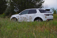 discovery sport forest